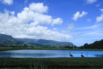 Kauai 927
