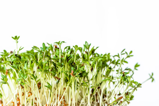 Fresh micro greens, seed sprouts for salad, healthy diet and clean eating concept