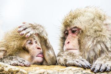 温泉に入る2頭の猿