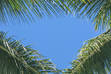 Blue sky with palm trees background with copy space background