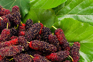 mulberry fruit and mulberry leaf  on white background healthy mulberry fruit food isolated