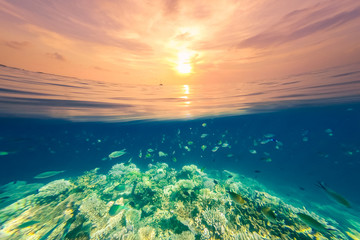 Underwater scene and split surface sunset sea