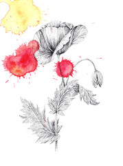 Poppy flower and colored blots, ink drawing, tattoo