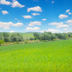 Green field and blue sky with light clouds.