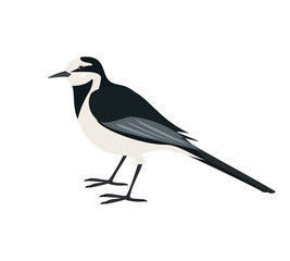 Cartoon wagtail icon on white background.