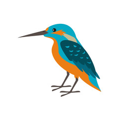 Cartoon kingfisher icon on white background.