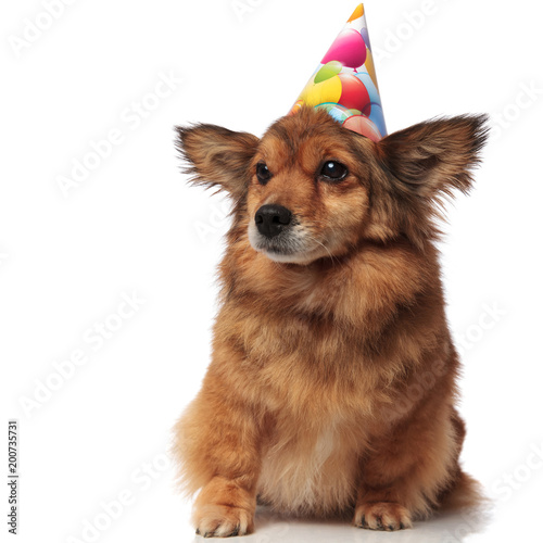 Curious Brown Seated Dog With Birthday Hat Looks To Side