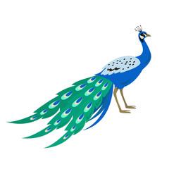 Cartoon peacock icon on white background.