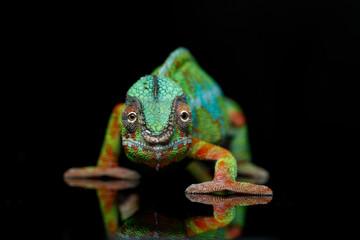 Autocollant pour porte Cameleon alive chameleon reptile