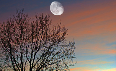 A composite among a detailed growing moon phase and a Oak tree with cloudscape sunset as background.