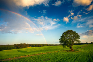 Rainbow over a spring green field