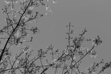 Frühling in Schwarz-Weiß