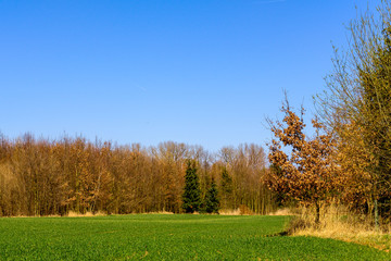 Green field surrounded by trees with old foliage at the edge of Prague