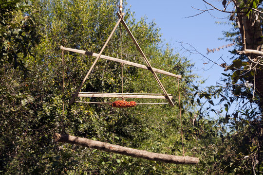 Ka Chuan Village Cambodia, traditional  Tompoun tribe squirrel trap hanging in jungle