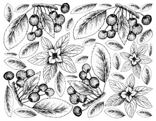 Hand Drawn Background of Bunchberries and Cherries