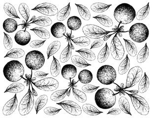 Hand Drawn Background of Fresh Bog Bilberries