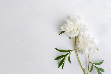 White peonies on a light background
