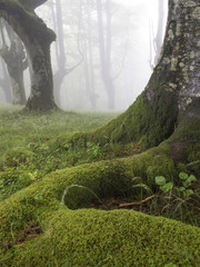 trees moss forest green