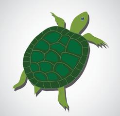 Green turtle, beautiful turtle, art turtle