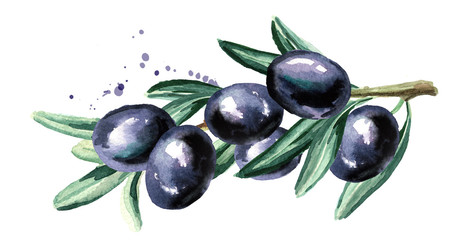 Branch with black olives. Watercolor hand drawn horizontal illustration isolated on white background