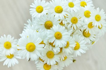 Bouquet of daisies. White flower. Field flowers.