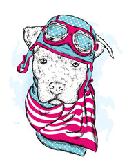 A pedigreed dog with a helmet and scarf. The biker. Pitbull. Vector illustration.