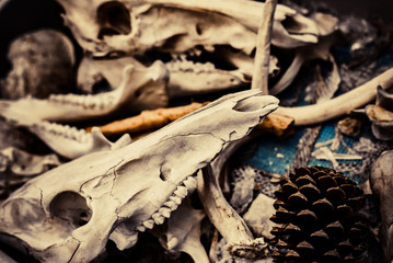 Pinecones and Animal Bones