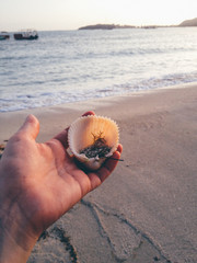 Seashell held in hand on the beach