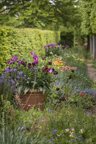 Quintessential vibrant english country garden scene landscape with quintessential vibrant english country garden scene landscape with fresh spring flowers in cottage garden mightylinksfo