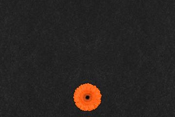 your empty board with flower, slate blackboard