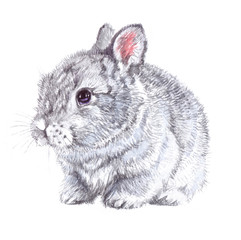 Watercolor animal bunny baby isolated on white background