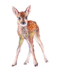 Watercolor animal fawn baby isolated on white background