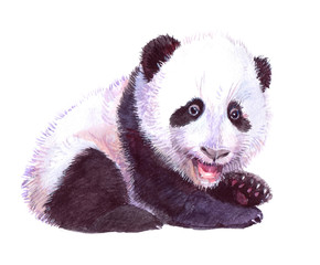 Watercolor animal panda baby isolated on white background
