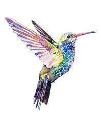 Watercolor animal Colibri isolated on white background