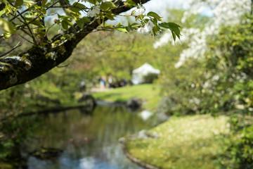 Japanese garden in Hasselt, Belgium