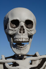 Portrait of human plastic skeleton skull laughing against blue sky