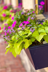 Colorful Summer Flowers in Window Box