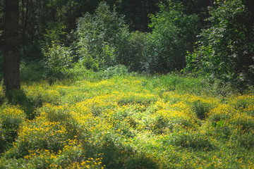 landscape photography of fresh spring forest nature with petal yellow flowers in field, natural floral background. Summer green lush grass meadow with soft blooming flowers. Nature and ecology concept