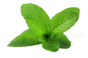 Pepermint (Mentha × piperita) leafs isolated on white.