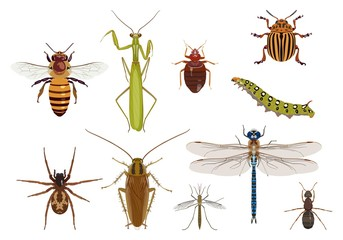 Set of creeping and flying insects. Vector illustration