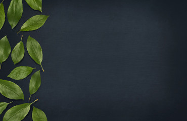 Fresh green leaves composition on blackboard. Border of leaves on dark background. Top view, flat lay