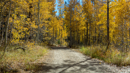Trail joining Spooner Lake and Marlette Lake, Nevada, USA, in the Fall, featuring yellow leaves of Aspen trees