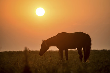 Wonderful detail in nature. The silhouette of a large horse up close. The horse stands  and watches the environment. Beautiful sunset and orange sky in the background.