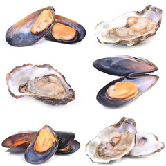 Fresh oyster and mussel