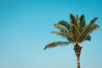 Palm against cloudless sky. Vacation, Tropics, Nature theme