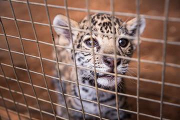 Cute cheetah young in ZOO