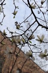 Early spring vegetation