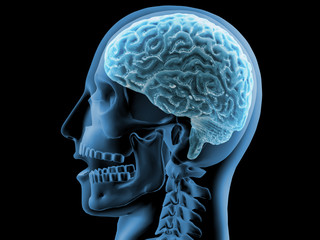 3D rendering x-ray image of human brain and skeleton