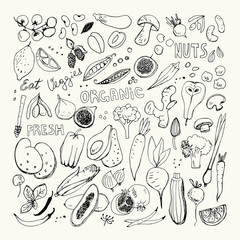 Organic Fruits and Vegetables Hand Drawn Doodles. Corn,Potato,Mushroom,Olives,Tomato,Garlic,Ginger,Eggplant,Peas,Broccoli,Fig,Pear,Berries,Apricot,Papaya,Garlic,Beet,Carrot,Citrus,Lemon,Hot Pepper