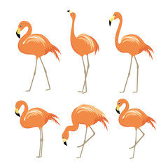 Pink flamingo Animal Bird Cartoon Character Vector Illustration